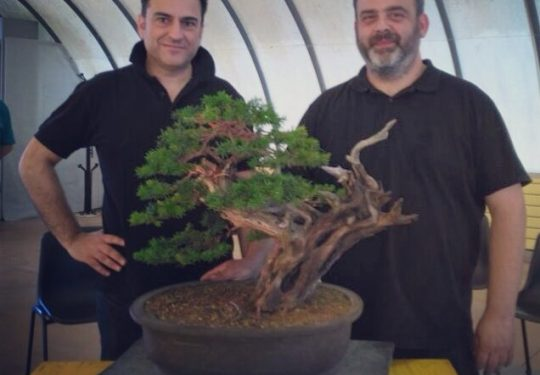 Dimostrazione con Giacomo Bellini su tasso cuspidata alla Oltre il Verde Bonsai Competition 2017