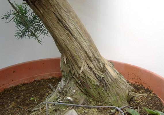 2009 - particolari del tronco