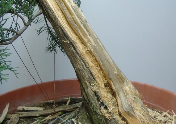 2009 - lavoro sulla legna secca