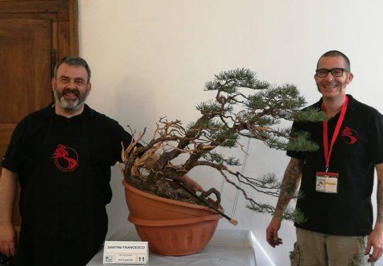 Demo Arcobonsai 2019 -  Lavoro su pino silvestre con Andrea Matteucci