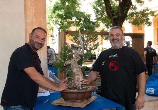 Demo Giareda Reggio Emilia 2019 -  Lavoro su juniperus chinensis con Gimmi Maccioni